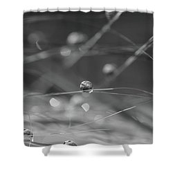 Shower Curtain featuring the photograph Orbit  by Connie Handscomb