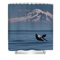 Orca - Mt. Baker Shower Curtain