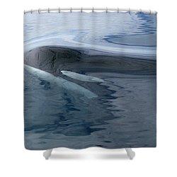 Orca Surfacing Southeast Alaska Shower Curtain by Flip Nicklin