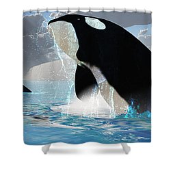Orca Whales Shower Curtain by Corey Ford