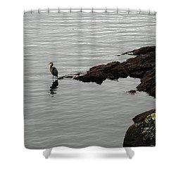 Orcas Island Bird  Shower Curtain