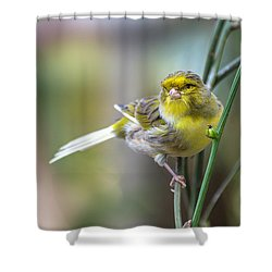 Orchard Oriole Shower Curtain