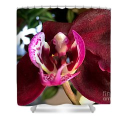 Orchid 10 Shower Curtain