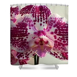 Orchid 13 Shower Curtain