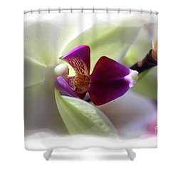 Orchid 2 Shower Curtain by David Bearden