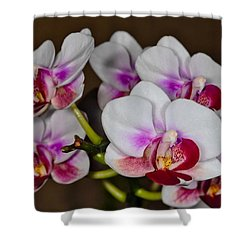 Orchid 306 Shower Curtain