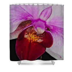 Orchid 376 Shower Curtain