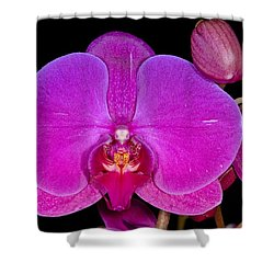 Orchid 424 Shower Curtain