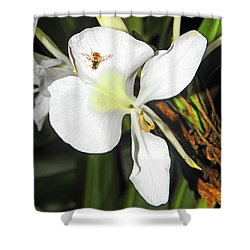 Orchid And Bee Shower Curtain