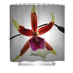 Orchid Cambria. Shower Curtain