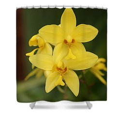 Orchid Shower Curtain by Christian Zesewitz