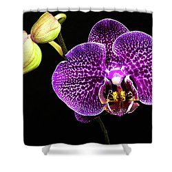 Orchid Shower Curtain by Christopher Holmes