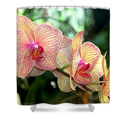 Orchid Delight Shower Curtain by Karen Wiles
