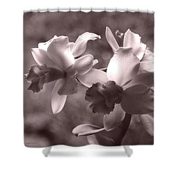 Shower Curtain featuring the photograph Orchid Dream - Square by Kerri Ligatich