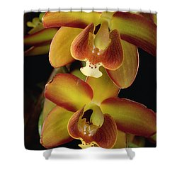 Orchid Eriopsis Sceptrum, Sipapo Tepui Shower Curtain by Mark Moffett