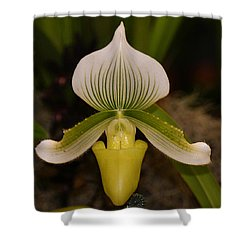 Orchid Flower 42 Shower Curtain by Gary Crockett