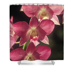 Orchid Flowers Shower Curtain by Kyle Rothenborg - Printscapes