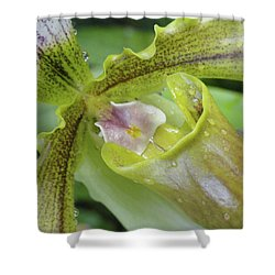 Orchid Love Shower Curtain by Trish Hale