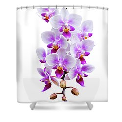 Orchid Shower Curtain by Meirion Matthias