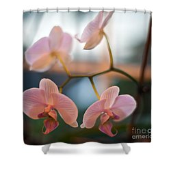 Orchid Menage Shower Curtain
