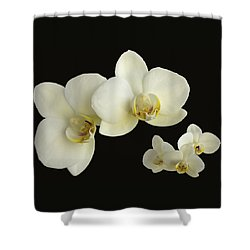 Orchid Montage Shower Curtain by Hazy Apple