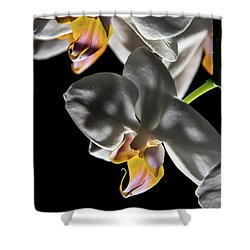 Orchid On Fire Shower Curtain