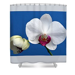 Orchid Out Of The Blue. Shower Curtain