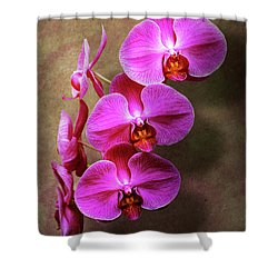 Shower Curtain featuring the photograph Orchid - Phalaenopsis - The Moth Orchid by Mike Savad