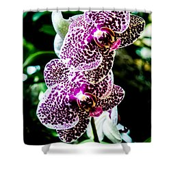Orchid - Pla236 Shower Curtain by G L Sarti