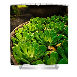 Orchid Pond Shower Curtain