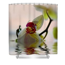 Orchid Reflection Shower Curtain by Elaine Manley