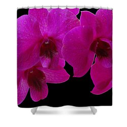 Orchid Song Shower Curtain