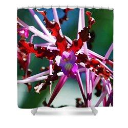 Orchid Spider Shower Curtain by Karen Wiles