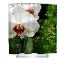 Orchid White Shower Curtain