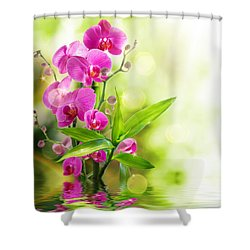 Orchidaceae Shower Curtain by Thomas M Pikolin