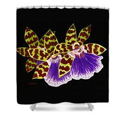Shower Curtain featuring the painting Orchids - Jumping Jacks With Black Background by Kerri Ligatich
