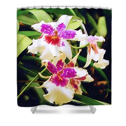 Shower Curtain featuring the painting Orchids 1 by Sandy MacGowan
