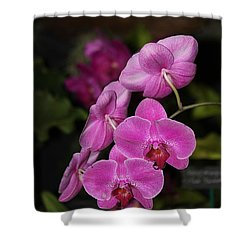 Orchids Alicia Shower Curtain