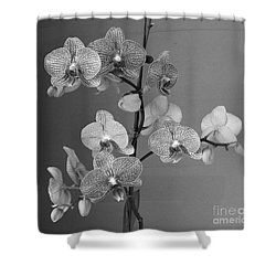 Orchids Black And White Shower Curtain