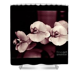 Orchids Hawaii Shower Curtain by Mukta Gupta
