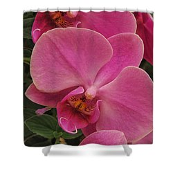 Orchids I Shower Curtain