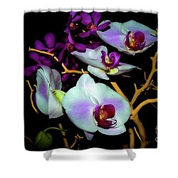 Shower Curtain featuring the photograph Orchids In Water Color by Diana Mary Sharpton