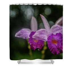 Orchids Love The Rain Shower Curtain