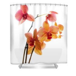 Orchids Shower Curtain by Mark Alder