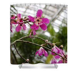 Orchids Myriad Botanical Gardens Okc Shower Curtain by Toni Hopper