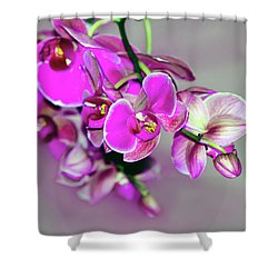 Orchids On Gray Shower Curtain by Ann Bridges