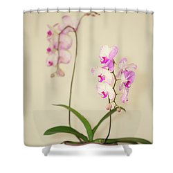 Orchids On Sideboard Shower Curtain