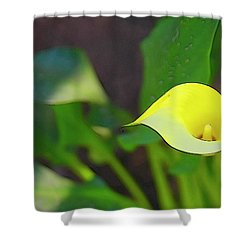 Shower Curtain featuring the photograph Oregon Calla Lily by Jerry Sodorff