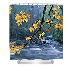 Oregon, Cascade Mountain Shower Curtain