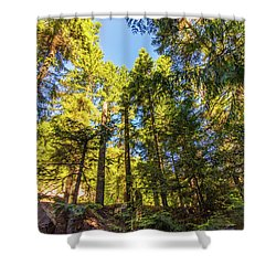 Shower Curtain featuring the photograph Oregon Trees by Jonny D